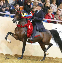 HA Toskcan Sun - 2012 US National Champion English Pleasure Junior Horse