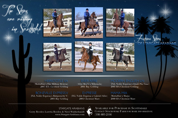 2013 Scottsdale Sales Horses of Stargate Arabians